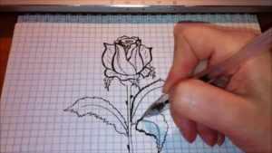 Рисунок розы в тетрадке